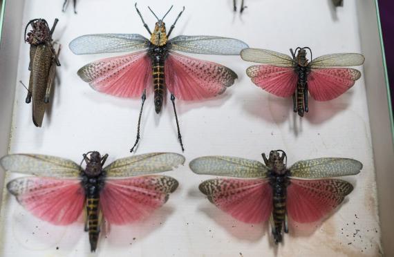 Musée du papillon de Catalogne